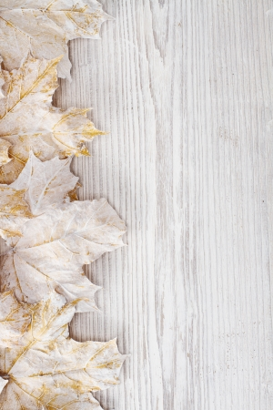 White leaves over wooden grunge background. Autumn maple photo