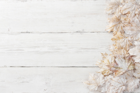 painted wood: White leaves over wooden grunge background. Autumn maple Stock Photo