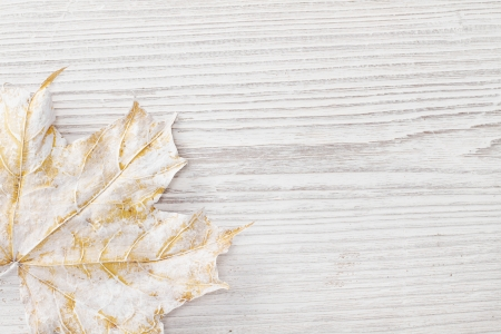 White leaf over wooden grunge background. Autumn maple photo