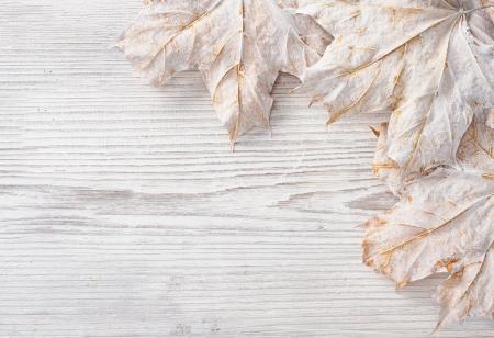 Hojas blancas sobre fondo de madera del grunge de arce del oto�o photo