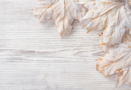 White leaves over wooden grunge background  Autumn maple Stock Photo - 17515635