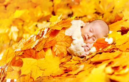 new born baby boy: Autumn Baby Sleeping, Newborn Kid in Fall Yellow Leaves, Asleep New Born Child Stock Photo