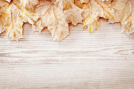 hojas antiguas: Fondo de madera Hojas blancas, Oto�o de madera del grano Junta textura, Decorado Hoja Plank