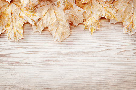Wood Background White Leaves, Autumn Wooden Grain Board Texture, Decorated Leaf Plank