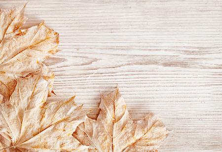 木材の背景テクスチャと葉、白い木の板、秋冬シーズン