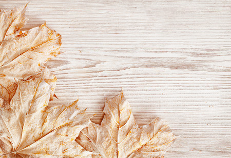 Wood Background Texture and Leaves, White Wooden Plank, Autumn Winter Season
