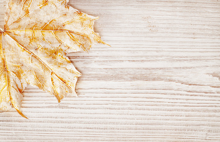 fall of the leaves: Wood Background Texture and Leaf, Autumn White Wooden Board, Close Up Decor Plank
