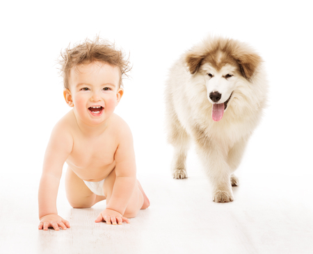 nappies: Dog and Child over White, Crawling Infant Baby with Kid Pet Friendship