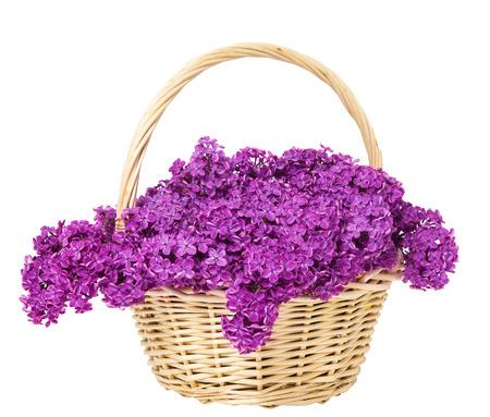 fiori di campo: Lilla Fiori Blooming bouquet nel cestino isolato su sfondo bianco