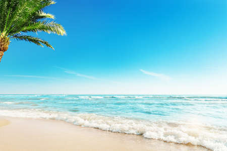 Tropic Beach with Palm Background. Summer Holiday Tropical Travel Resort. Paradise Beach Vacation. Background with Palm Tree Sand Ocean Waves
