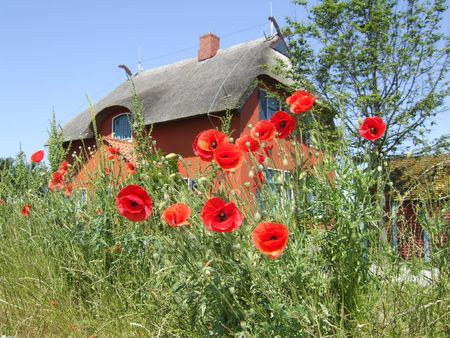 a summer house withe red poppy plants in front Stock Photo - 2683062