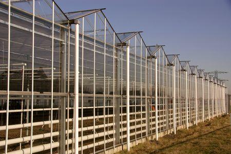wetness: greenhouses