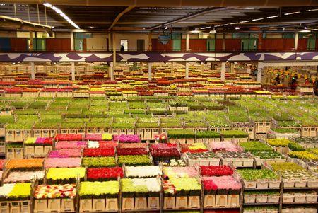 flower auction Stock Photo