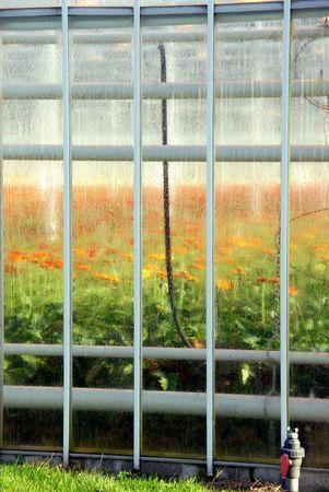 moistness: serra con i fiori Archivio Fotografico