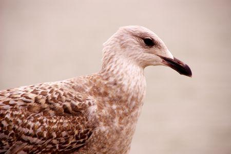 mooring bollards: aportrait of a sea-gull