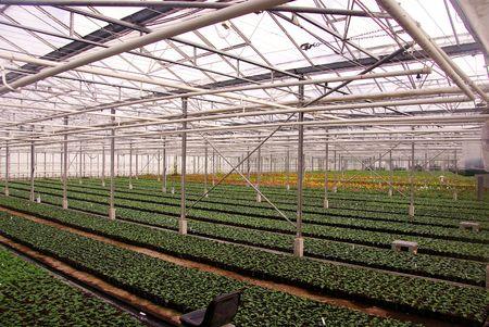 moistness: dalia piante in una serra
