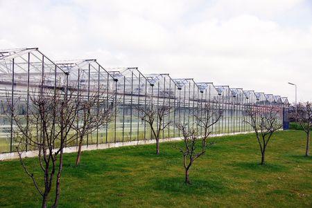 moistness: serra con l'erba e gli alberi di fronte