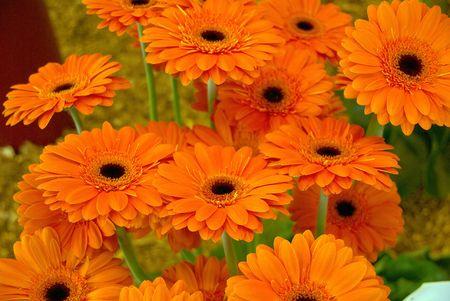 florets: a bunch of gerbera flowers
