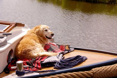 Dog at a motorboat Stock Photo