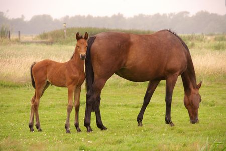 A brown horse with her foal Stock Photo