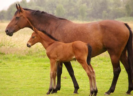 Abrown horse with het foal