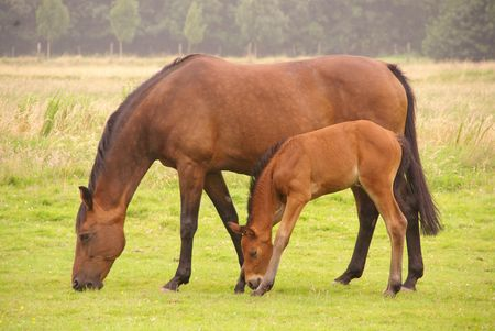 A foal tries to graze with his long legs and short cervix