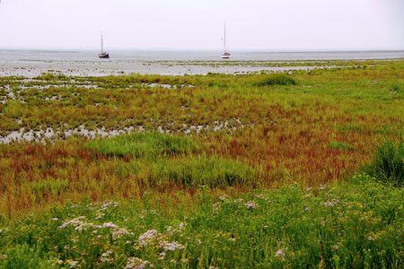 dikes: Vegetated mud flats at the coast of aFrisian Island, the Netherlands