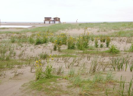 dikes: Vegetated mud flats at the beach of a island