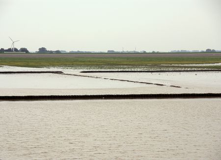 dikes: The vegetated mud flats of the Frisian coast in the Netherlands