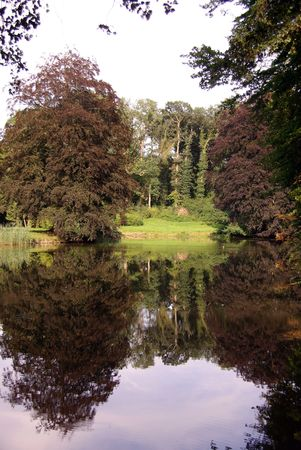 lochs: Trees in a park at a calm day in summer