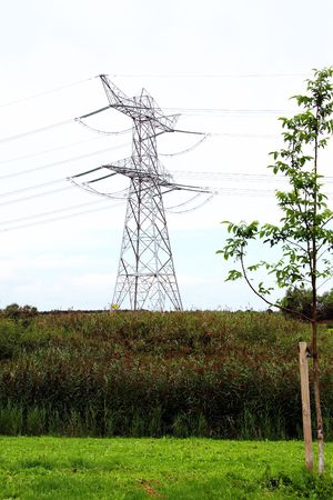 powerplants: A high tension mast with reed and grass in front