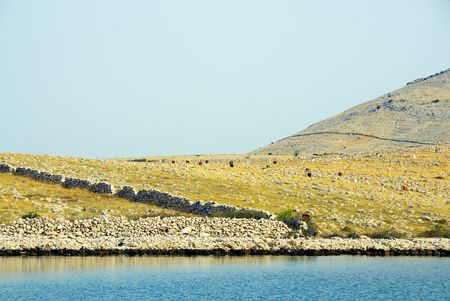 kornat: The Kornati national park in Croatia with young trees