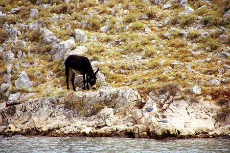 kornat: A donkey at a hill in Croatia Stock Photo