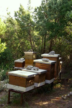 Beehives in a rural environment photo