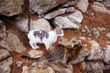 endow: young cats in the forest attracting attention