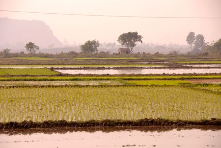 Rice fields in Vietnam Stock Photo - 4288205