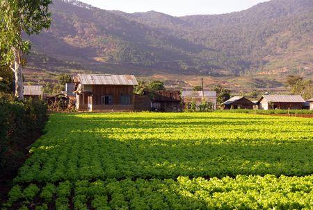 베트남의 Lang conga에서의 농업