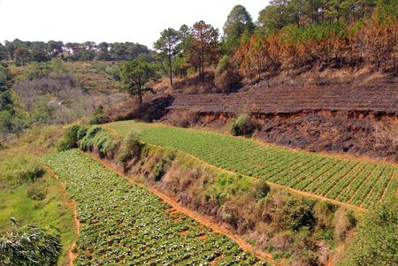 agronomic: Agriculture at terraces  Stock Photo