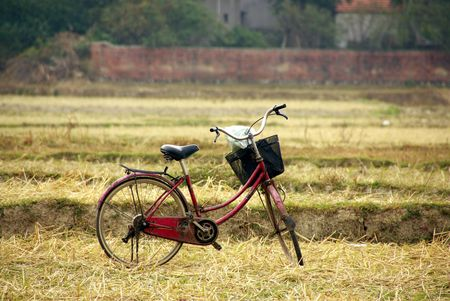 A bike in a rice field