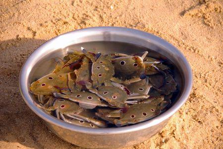 decapods: Fresh caught crabs