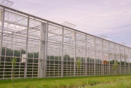 glasshouse: glasshouse along a ditch