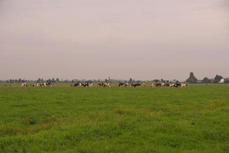 A rural landscape photo
