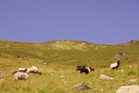 fuegen: A landscape with sheep in the Austrian Alps Stock Photo