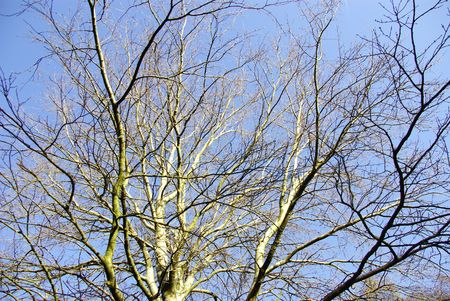 Tree canopy in winter Stock Photo - 5896694