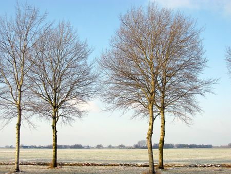 A winter landscape with trees and meadows photo