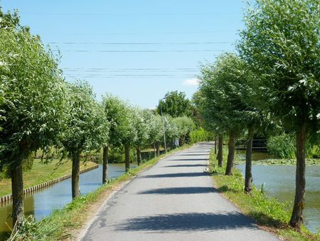 A road with willow trees photo