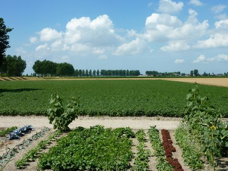 flakkee: A field with potato plants and an allotment garden Stock Photo