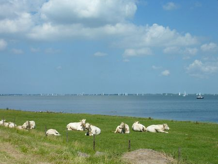 flakkee: A dutch landscape with cows and water Stock Photo