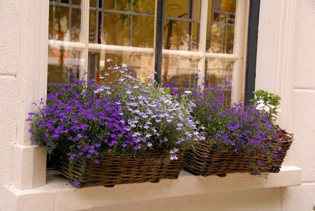 Flowering plants in baskets Stock Photo