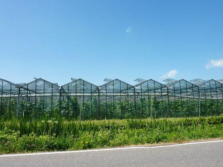 moistness: Verdure in serre in Olanda